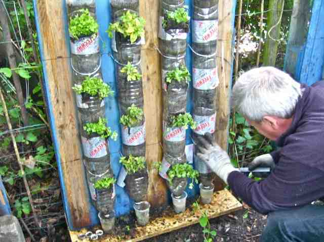 proxy - How to make a kitchen garden using 'bottle towers' - How To Tips
